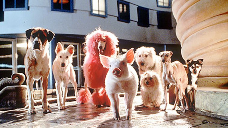 BABE: PIG IN THE CITY | Alamo Drafthouse Cinema